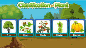 Resultado de imagen para how do plants help classify plants