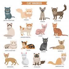 <b>Burmese</b> Cat Images | Free Vectors, Stock Photos & PSD