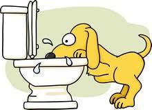 Γιατί οι σκύλοι προτιμούν το νερό από τη τουαλέτα παρά από το μπολ;