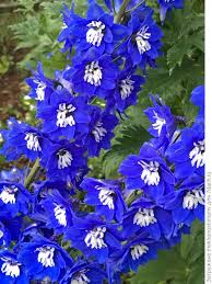 20 голубых <b>цветов</b> для вашего сада