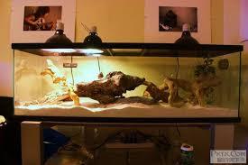 「鬃獅蜥」的圖片搜尋結果