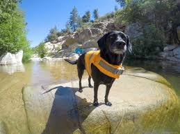 Dog Gear Review: <b>Hurtta Life Savior</b> – Hiking Girl with Dog