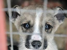 """Результат пошуку зображень за запитом """"безпритульні тварини"""""""