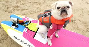 Surfing dogs totally blow Al Roker