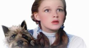 Image result for toto, we're not in kansas anymore