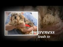 Puppy Mill Awareness Day PA