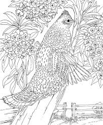Small Picture 133 best coloring pages images on Pinterest Coloring books