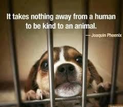 IT TAKES NOTHING AWAY FROM A HUMAN TO BE KIND TO AN ANIMAL ...