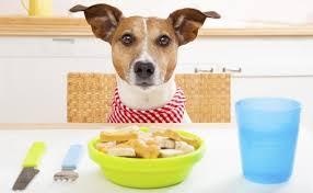 <b>Top</b> 10 <b>Best</b> Dog Foods for <b>Weight</b> Loss | Dog Food Advisor