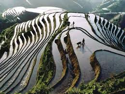 Image result for pictures of china agriculture
