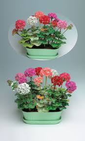 Jewelry Design - <b>Home Décor</b> Flower Plant with Seed Beads - Fire ...