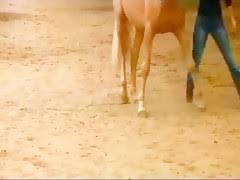 Most Relevant Videos - peliculas zoofilia caballos montando - Sexo ...