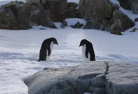 why go to antarctica a photo essay big travel nut adelie penguins on petermann island antarctica