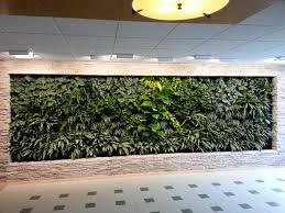 indoor green wall with amazing pattern of the plants design of indoor living wall frame amazing office plants