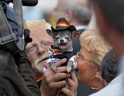 <b>Dog's</b> fashion - Wikipedia