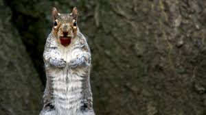 Sneaky <b>Squirrels</b> Steal Acorns | Spy In The Wild | BBC Earth ...