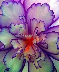 Resultado de imagen para flores hermosas