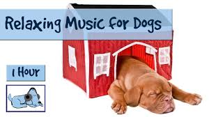 1 HOUR <b>DOG</b> MUSIC <b>SPECIAL</b>! Relaxing Music for <b>Puppies</b> and ...