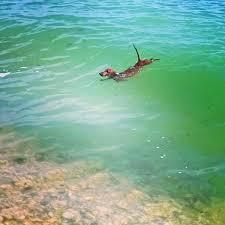 Surf Dachshund | Детеныши животных, Фото животных, Собачки