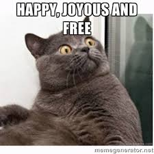 Happy, Joyous and Free - Conspiracy cat | Meme Generator via Relatably.com