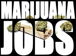 need a career change how about the marijuana industry herb scout need a career change how about the marijuana industry