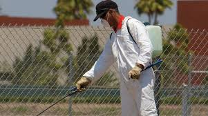 Image result for pest control free web images