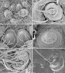 Araneae, Haplogynae