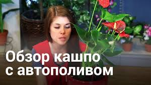 "Кашпо с автополивом ""LECHUZA"" - YouTube"