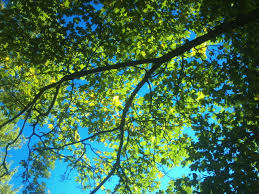 Image result for dia otoñal soleado