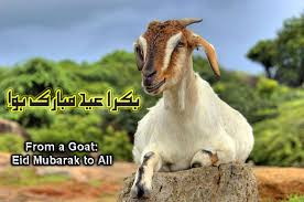 Top Bakrid Images for free download