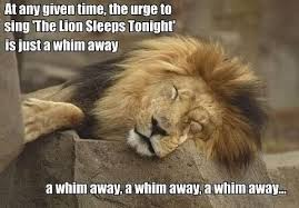 The lion Sleeps Tonight | Animals Memes | Lion Meme | Pinterest ... via Relatably.com