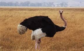 Resultado de imagen de avestruz