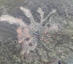The World's Oldest Forest Has 385-Million-Year-Old <b>Tree Roots</b> ...