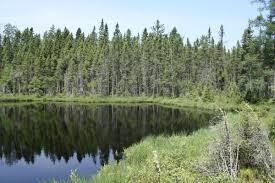 Blackjack Springs Wilderness