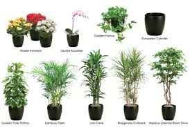 while many plants can benefit from the regulated temperature and light indoors not all interior plants have the same sunlight or temperature requirements best office plants no sunlight