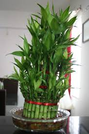 indoor plants decoration ideas with white pot 17051 183 3 kb rustic home decor cheap office plants
