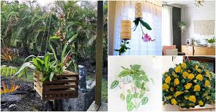 20 Cheap And <b>Easy DIY Hanging</b> Planters That Add Beautiful Style ...