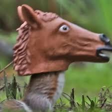 Horse Head <b>Squirrel Feeder</b> Video - Squirrel Goes Nuts – Archie ...