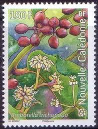 Image result for amborella stamp