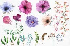 Peonies Clipart, Watercolor Peony, Hand Painted Clip Art, Instant ...