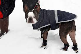 <b>Cute Dog Boots</b> to Buy Your <b>Pet</b> for Winter — Starting at Just $16