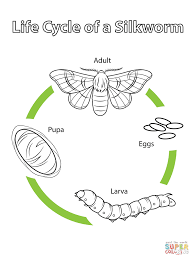 life cycle of silkmoth clipart clipartfest life cycle of a silkworm