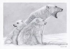 Drawing of Polar <b>Bear Family Animal</b> Wildlife Pencil Sketch Artwork ...
