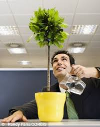 Benefits Psychologists Found That Introducing Greenery To Spartan Workplaces Led A 15 Per Cent  Z