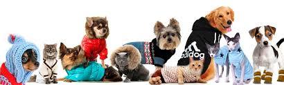 Подбор и доставка <b>одежды для кошек и</b> собак в Екатеринбурге