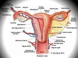 pengobatan penyakit kanker rahim