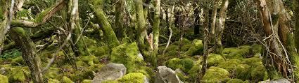 Green Man – Stiwdio mewn Blwch Ceffylau – Peak
