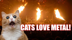 <b>Heavy Metal Cats</b>! (2020) - YouTube