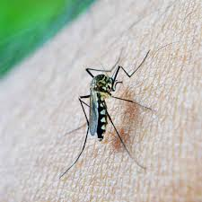 Image result for sprinkler system mosquito control