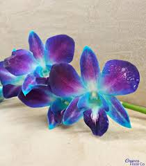 day orchid decor:  images about orchids on pinterest orchid flowers purple orchids and flower